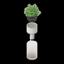 Cosa ti serve: acqua / terriccio / semi o pianta preinvasata